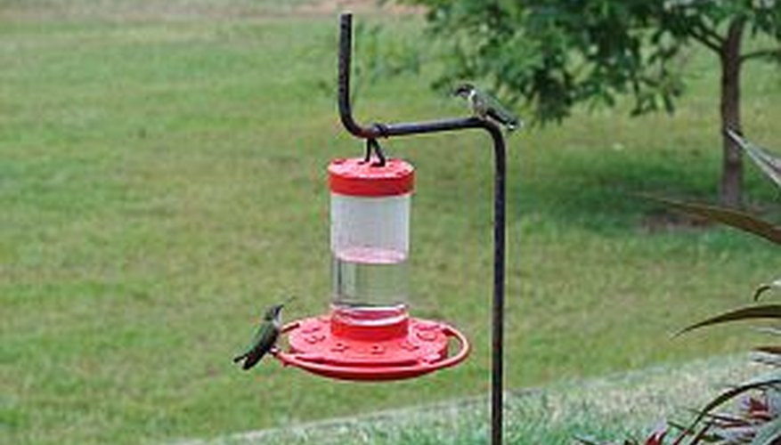 Hang a hummingbird feeder in the yard to attract hummingbirds.