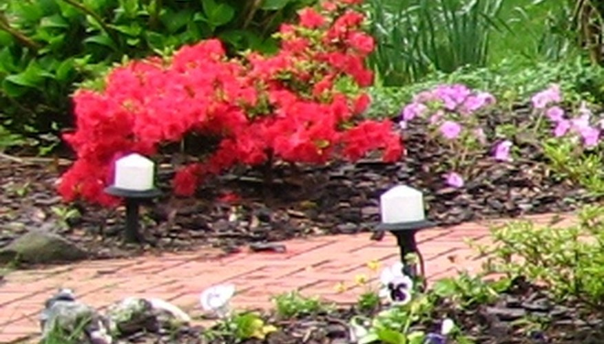 Low-voltage garden lights along a walkway