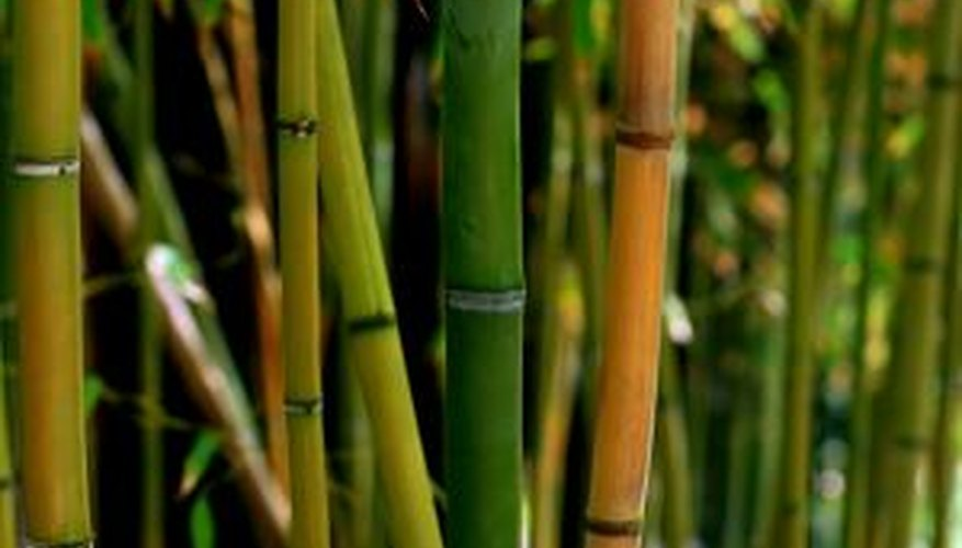 Bamboo generally grows in clumps.