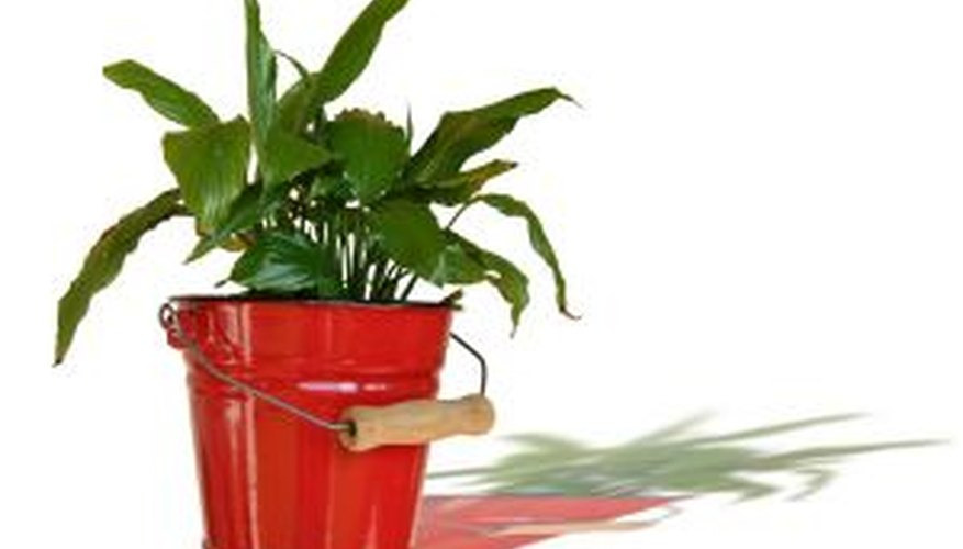 Potted plants require specialized care.