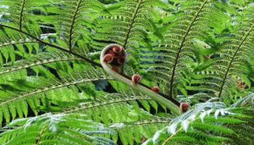 Fern fronds add texture to your landscaping.