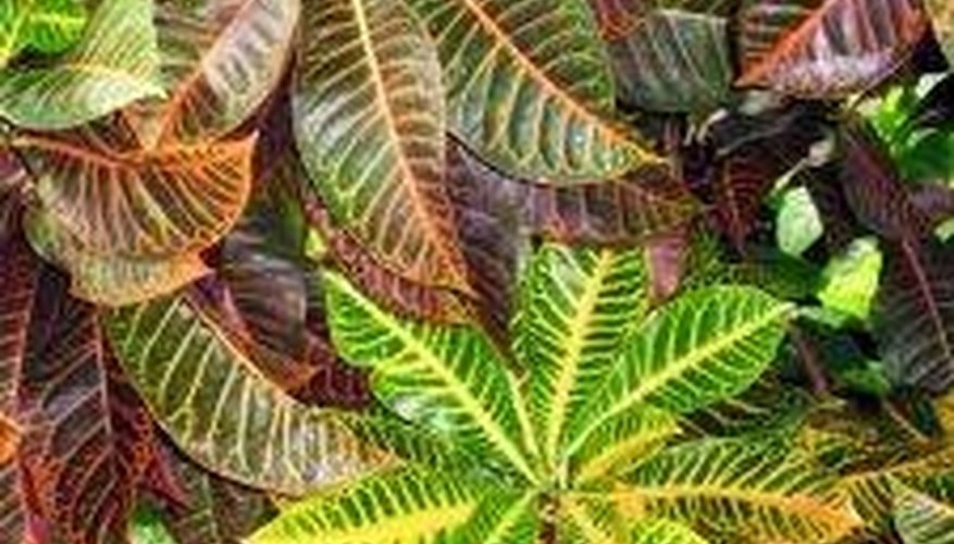 Caring For Tropical Plants Part - 23: Take Care Of Tropical Plants