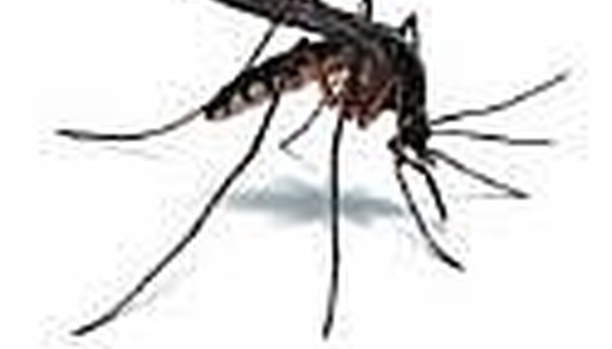 How To Get Rid Of Mosquitoes Around Your Home. By Contributor. Mosquitoes