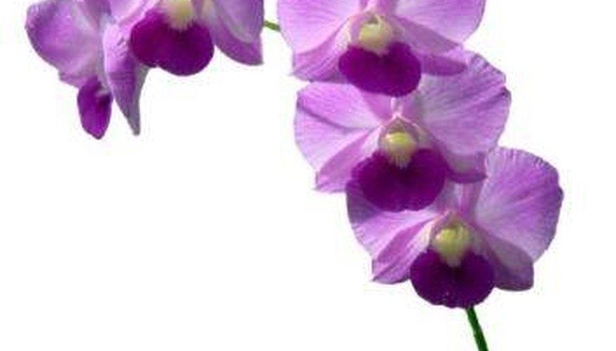 Orchids Garden Guides