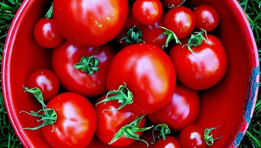 Homemade Tomato Plant Food Garden Guides
