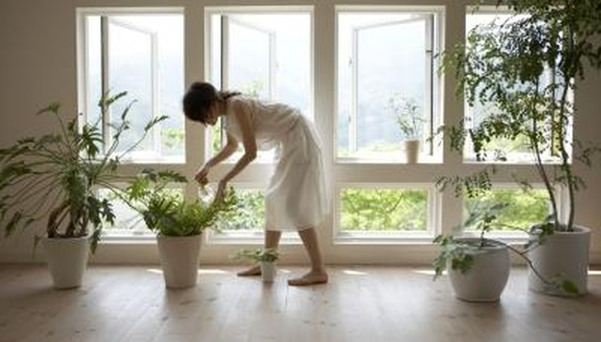 An automatic plant watering globe can take away the worry of forgetting to water plants.