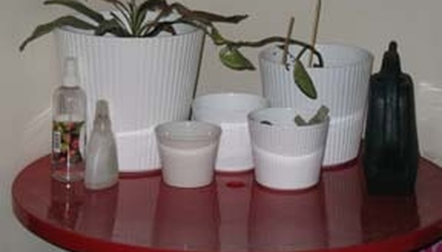 The Effect of Plant Pot Sizes