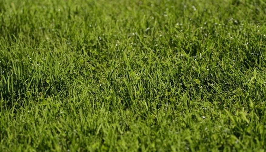 Remove the dog urine smell for a healthy lawn.