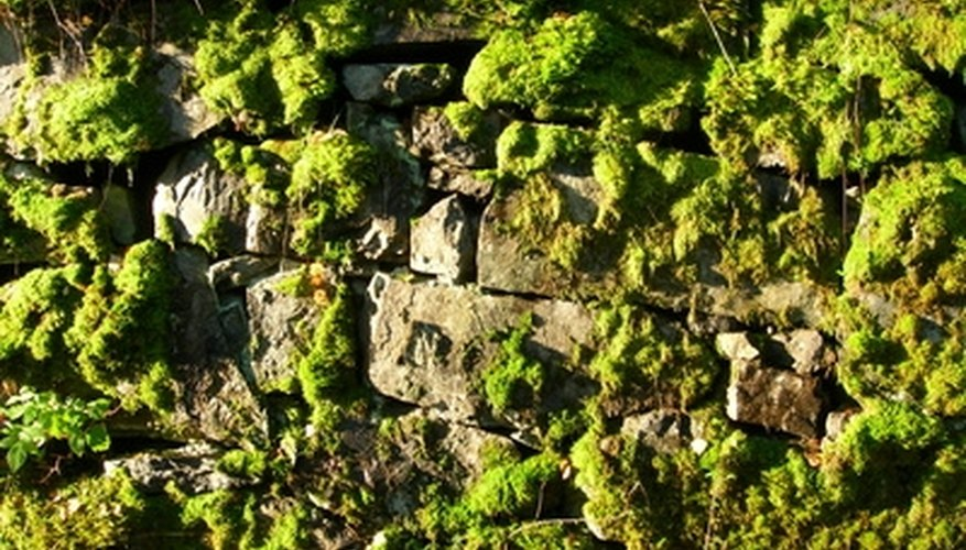 Grow your own moss for natural rock gardens.