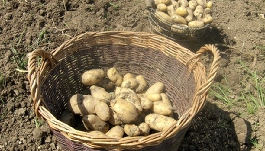 Put potatoes on your gardening list.