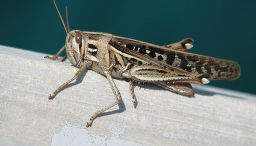 Get rid of crickets and moles before they ruin your garden.