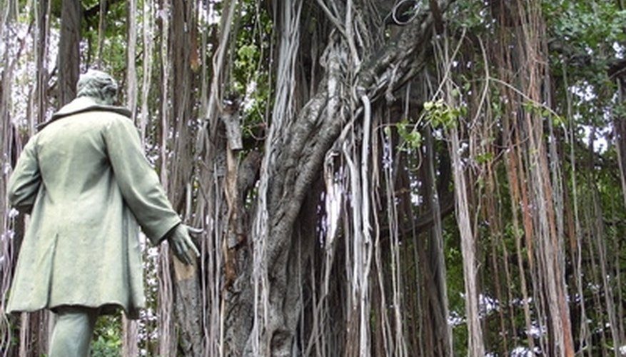 Liana plants are vines that can grow up to 3,000 feet in length