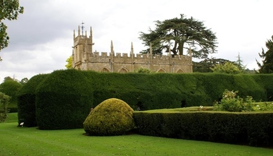 Hedges not only provide privacy, but can help with noise and wind control as well.