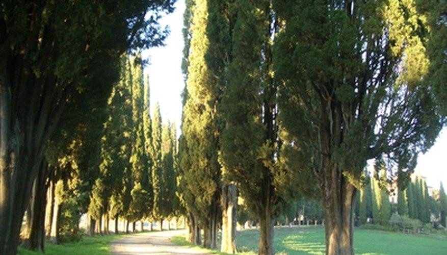 how to grow and trim oak tree