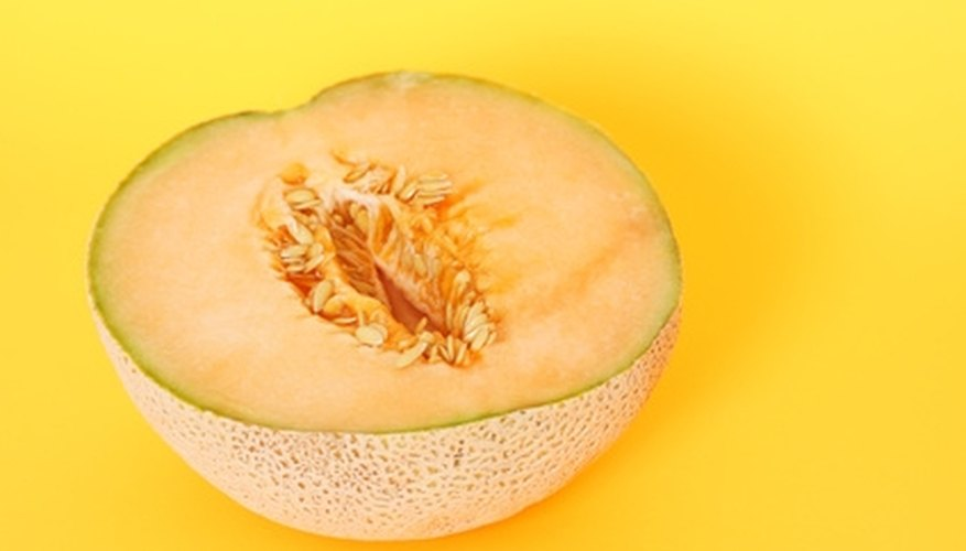 Cantaloupe seeds are usually dried for planting next year.