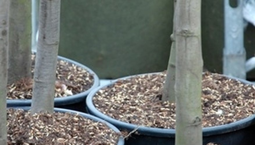 Trees in containers can be planted during the fall.