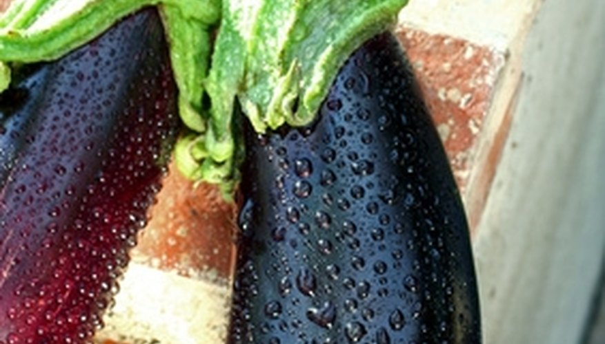 Ripe eggplants are glossy.