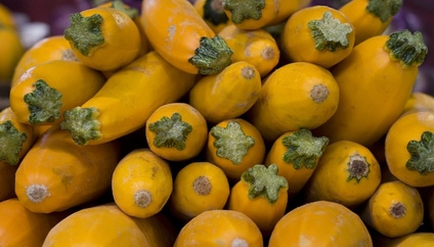 Summer squash harvest periods vary.