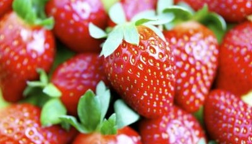 Only fully colored strawberries should be picked from the plant.