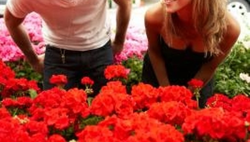 Your local nursery can provide a selection of red flowers.
