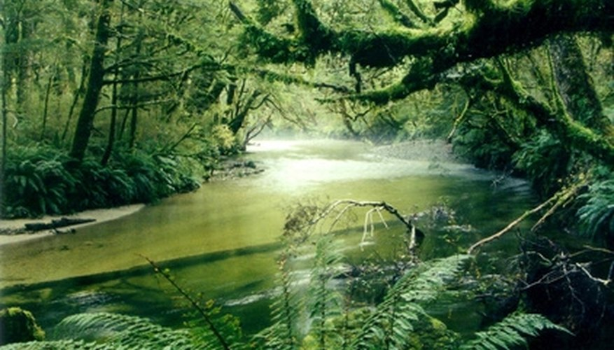 There are thousands of plant species in the rainforest.