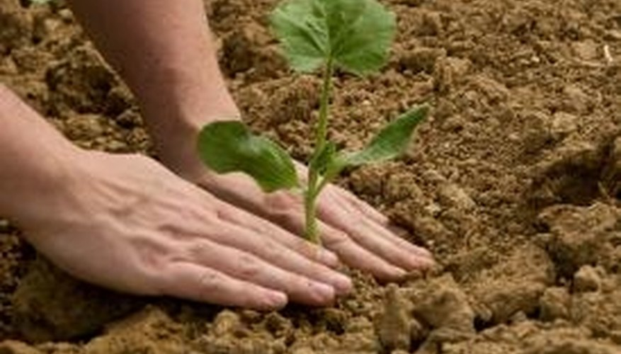 For a plant to thrive, the soil must have a healthy pH level.