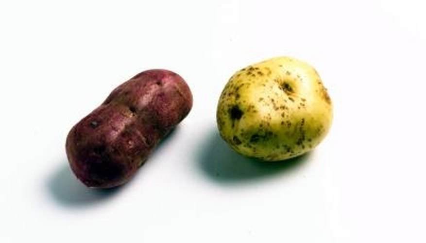 No matter the variety, potatoes grow easily in lower Michigan.