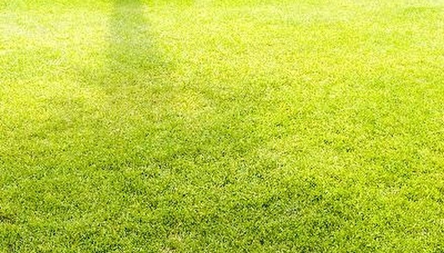 Finding the right fertilizer can help produce a bright green lawn.