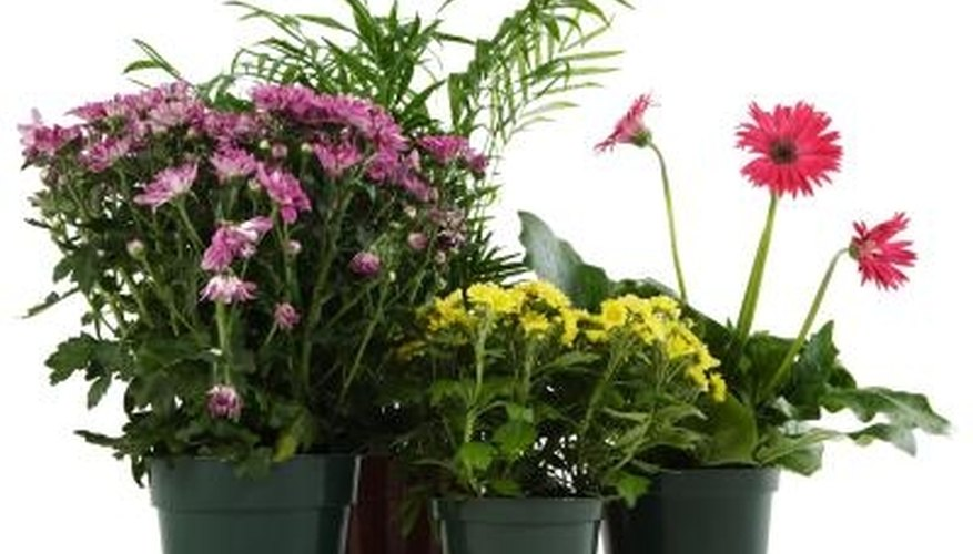Inspect new plants for pests before bringing them home.
