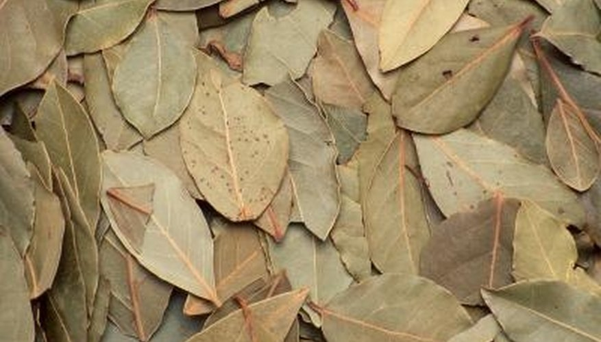 Bay leaves are also known as laurel leaves.