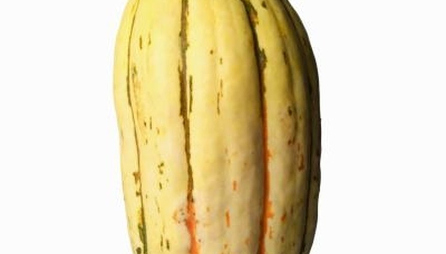 Delicata squash may be stored for winter eating.