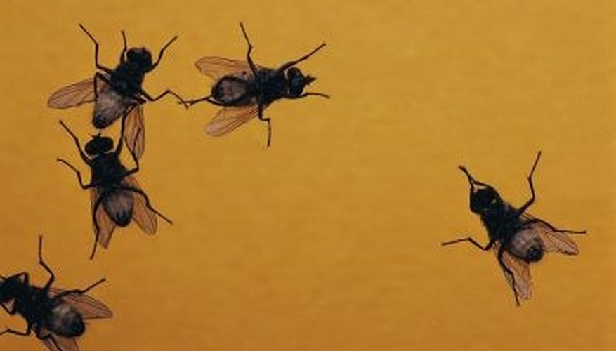 Ensure the safety of your household by using non-toxic measures to kill gnats.
