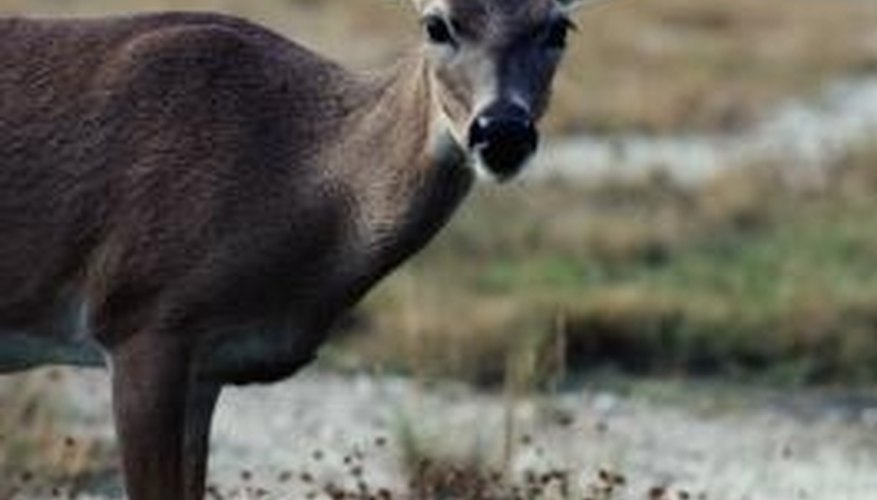 Hungry deer can devastate your landscape.