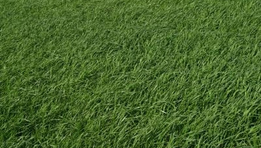 Keep grass at a height of about 3 inches to shade out weeds.
