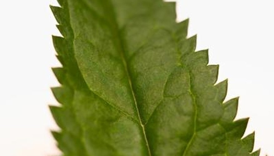 Nettles have small hairs on the leaves that can cause irritation.