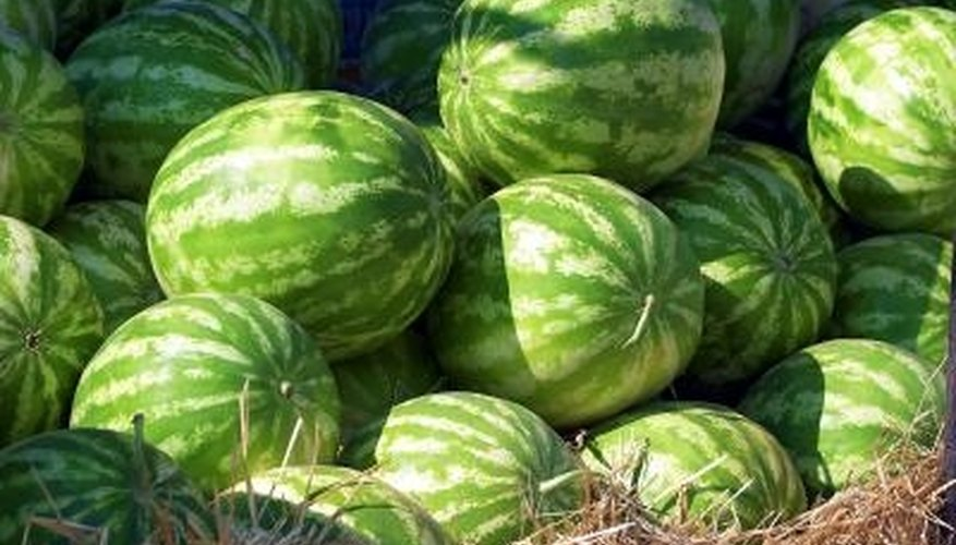 Apply fungicides to well-watered watermelon plants to prevent causing damage.