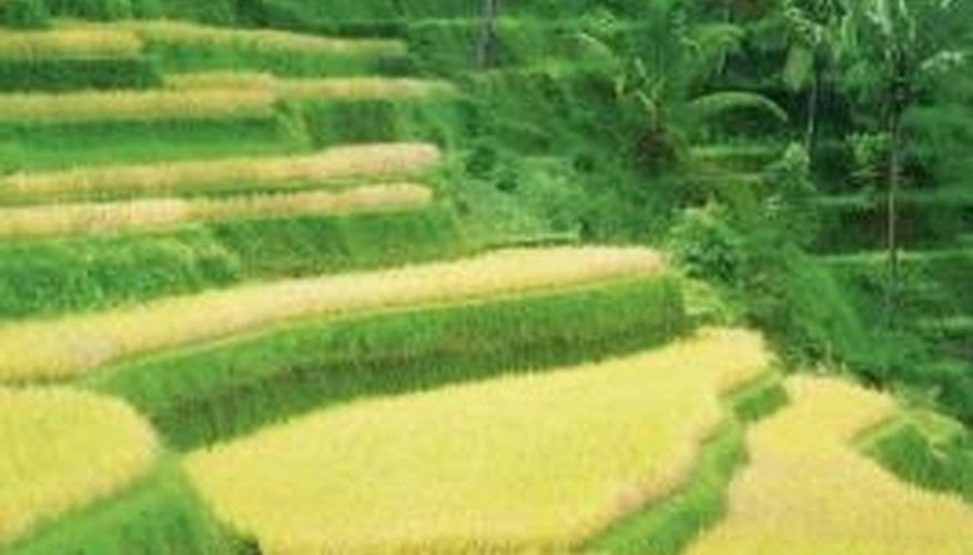 Terracing can make otherwise unusable land capable of supporting agriculture.