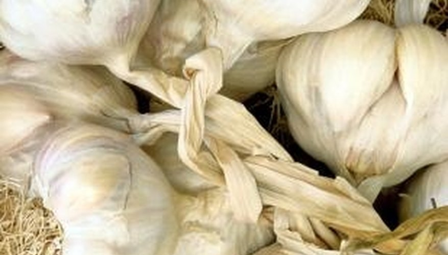 Garlic is one of many safe ingredients for making homemade organic fungicides.