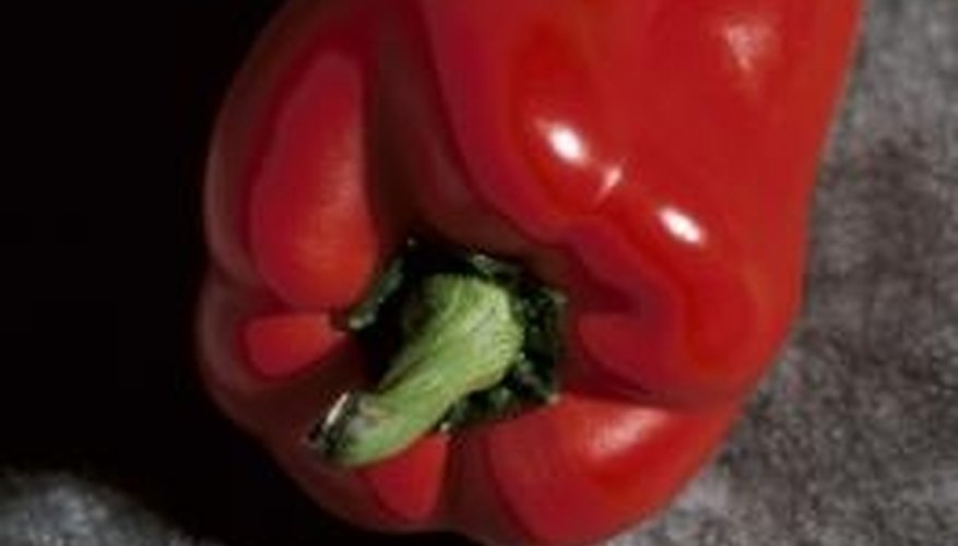 Red bell peppers can be grown in the home garden.