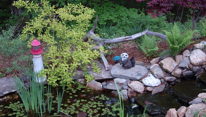 Plants to landscape around a small garden pond garden guides for Landscaping around a small pond