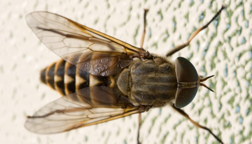Propane insect foggers can help eradicate flying insects in your home.