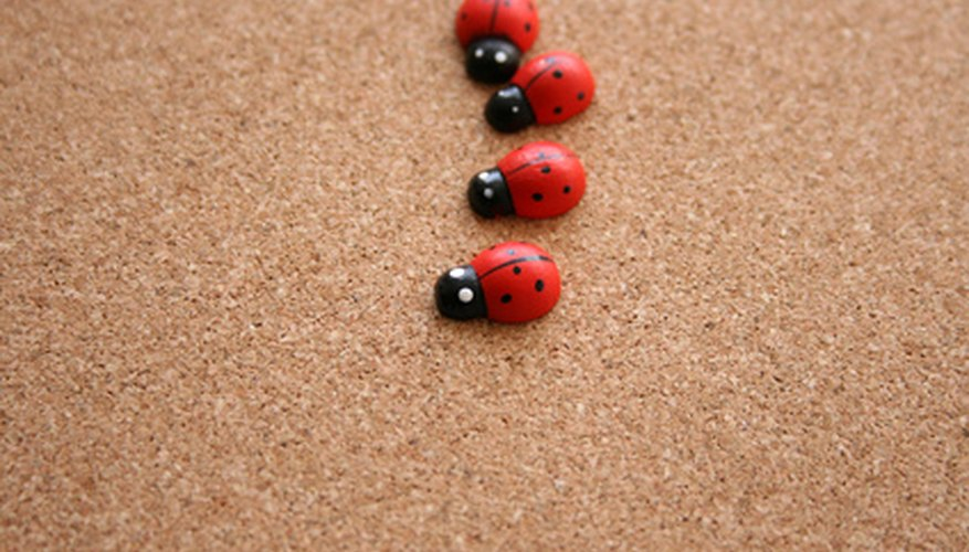 Asian lady beetles look like ladybugs but don't benefit the garden in the same way.