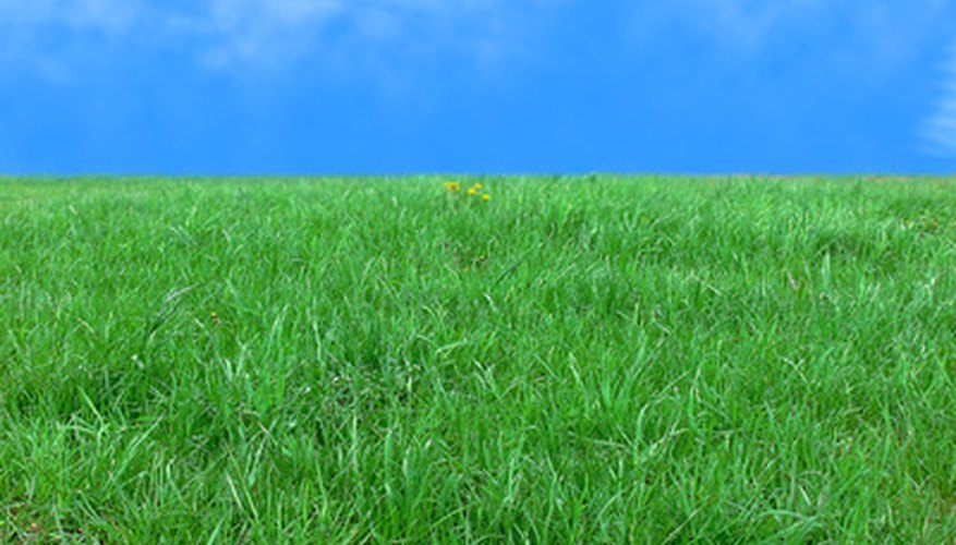 Healthy green grass makes a perfect place to play and relax.