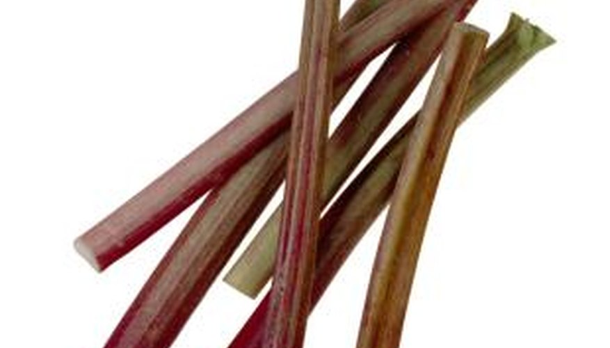 Harvest rhubarb stalks for baking.