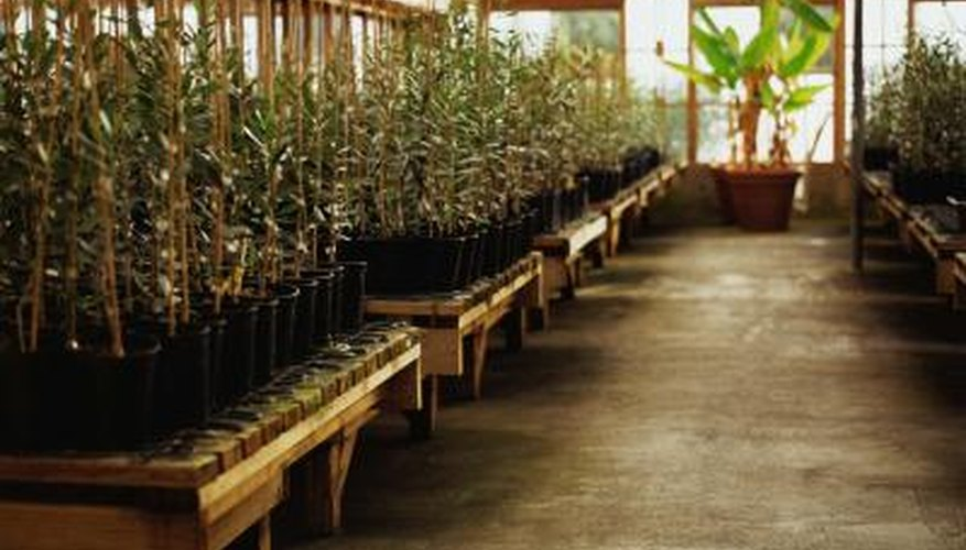 Hydroponics takes only a few basic agricultural skills.