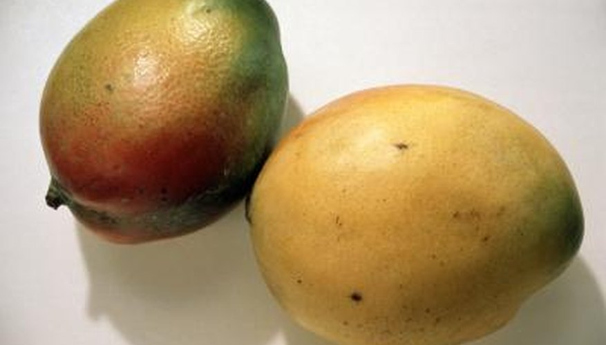 Mangoes have showy blooms in spring followed by large crops of fruit in summer.