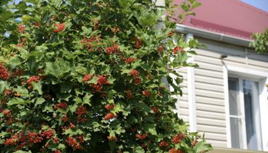 A flowering shrub covers a portion of a home's exterior.