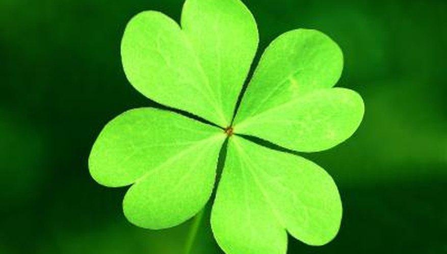 Flowers That Bring Luck Garden Guides