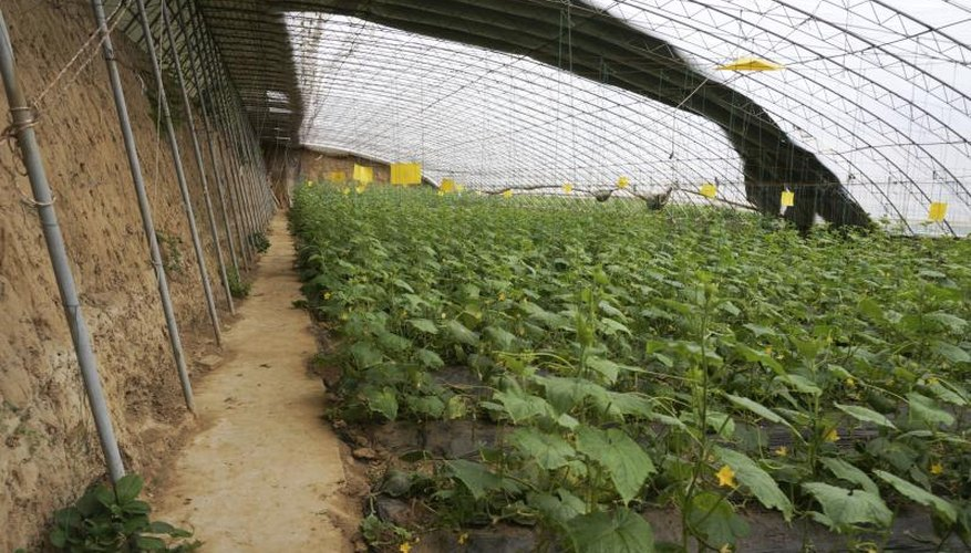 Periods of cloudy weather may require growers to temporarily roll off shade cloth from greenhouses.