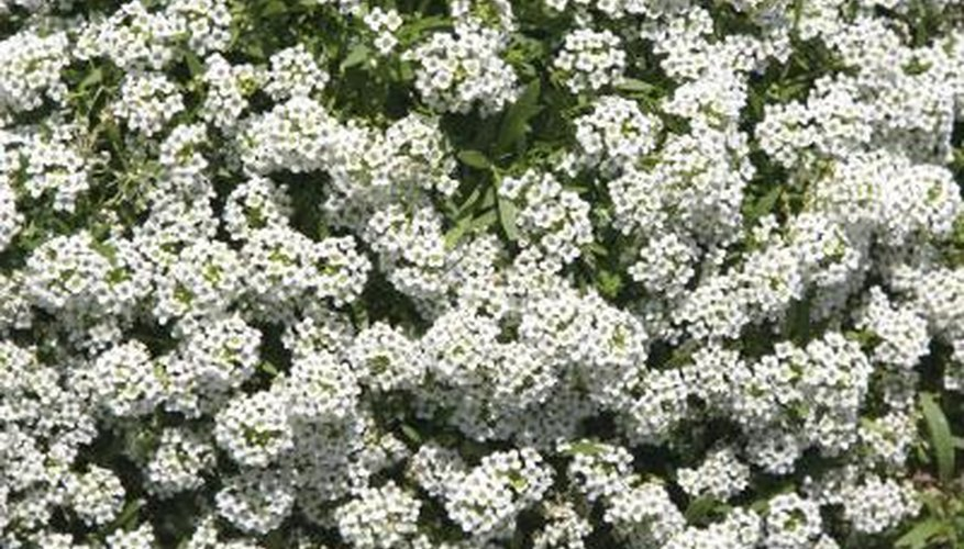 Garden Planting Guide - Urban Farmer Seeds
